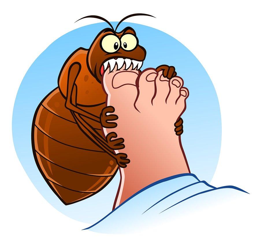 natural bed bug killer | bed bug bite remedy | bedbug traps